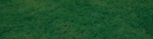 Bright green field of grass