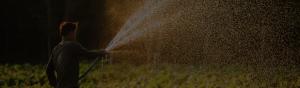 Farmer watering his crops.
